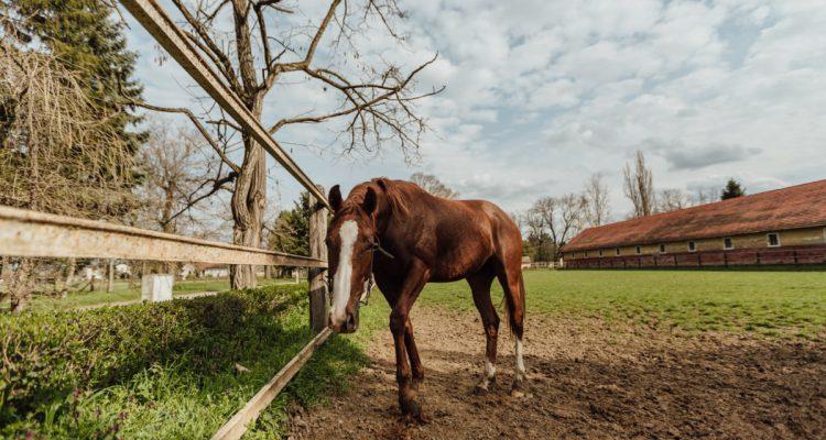 paard-aan-huis-houden